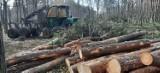 Ruszyła kolejna wycinka drzew w Zielonej Górze! Celem jest rozbudowa cmentarza