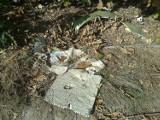 Wysypisko śmieci w w Żorach. Co zobaczyła nasza Czytelniczka w Rogoźnej? [ZDJĘCIA]