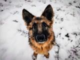Konin: Okaż serce zwierzakom ze schroniska! Psy i koty czekają na adopcję