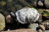 Znaleziono żółwia!