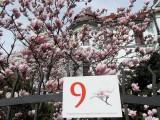 Masz zdjęcia cieszyńskich magnolii? Zgłoś je do konkursu!