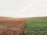 """Dzierżawa ziemi rolnej - oto stawki za ha. """"Pazerność ludzi nie zna granic"""", komentuje internauta"""