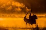Znamy zwycięzców kwileckiego konkursu fotograficznego Przebudzenie Wiosny: Zobaczcie zdjęcia [FOTO]