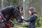 Tatry. Animalsi: Konie pracują za ciężko. TPN: lekarze dopuścili zwierzęta do pracy