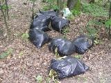 Śmieci Żory: Kto wyrzucił lodówkę do lasu? Las to teren niczyj!