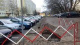 Szczury biegają na ulicy Głowackiego. Mieszkańcy przerażeni