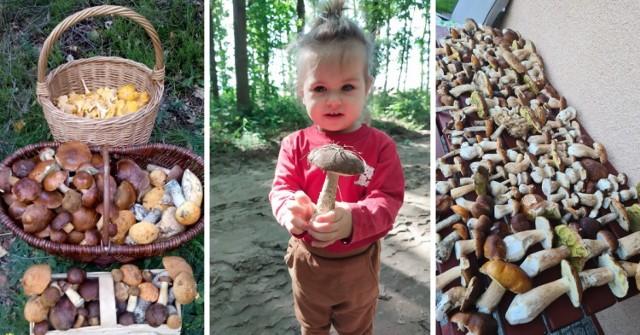 """W pomorskich lasach można znaleźć prawdziwe skarby! Zobaczcie zdjęcia grzybów Czytelników """"Dziennika Bałtyckiego"""" >>>"""