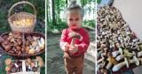 Grzyby na Pomorzu! Wspaniałe zbiory naszych Czytelników. Te zdjęcia mówią jedno: Sezon na grzyby w pomorskich lasach trwa!