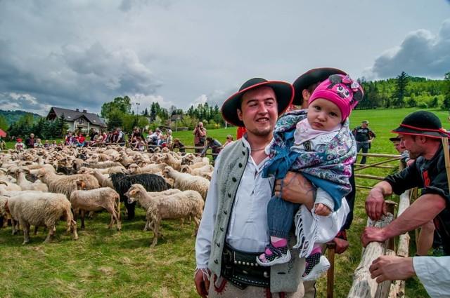 Miyszani owiec to stary pasterski zwyczaj, który będziemy mogli zobaczyć na własne oczy już 1 maja w Koniakowie. Jak co roku owce wyjdą na  beskidzkie hale  przy akompaniamencie góralskiej muzyki i obrzędów, których nie zobaczymy nigdzie indziej.