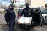 Strażnicy miejscy rozdają maseczki ochronne w Legnicy [ZDJĘCIA]