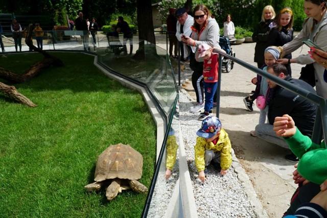 23 maja obchodzony jest Dzień Żółwia. Z tej okazji w niedzielę w poznańskim Starym Zoo otwarty został Żółwi Dom. - Żółwi dom jest unikalnym mini rajem dla cennych gatunków żółwi lądowych i wodnych, stworzonym z myślą o dotychczasowych podopiecznych oraz pochodzących z konfiskat - mówią przedstawiciele zoo. Na miejscu pojawił się nasz fotoreporter. Zobacz w galerii, jak wygląda dom dla żółwi w Poznaniu.  Przejdź dalej -->