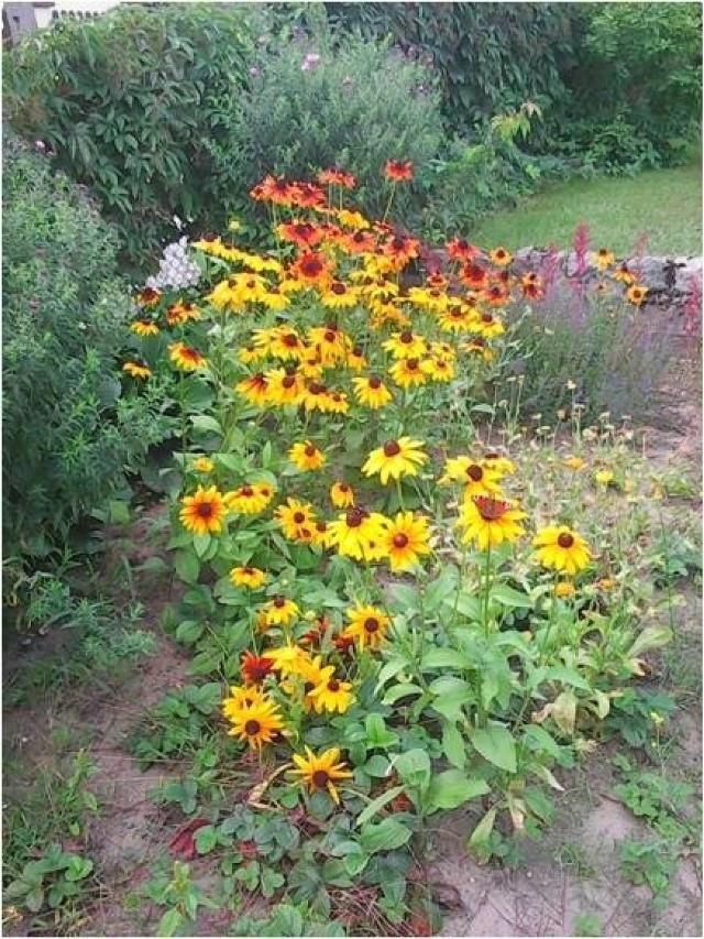 Nasza Czytelniczka przesłała nam także zdjęcia swojego ogrodu