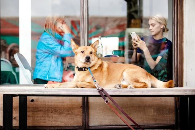 Pani na kawie a pies wiernie czeka? Niekoniecznie, są miejsca, do których możesz zabrać czworonoga