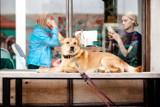 Tu możesz przyjść z psem. Krakowskie kawiarnie i restauracje przyjazne zwierzakom