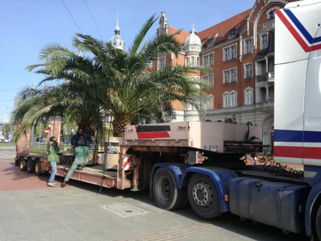 Palmy rynek Katowice