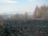 Tylko w tym roku odnotowano 39 interwencji przy wypalaniu traw. A najgorsze dopiero przed nami!