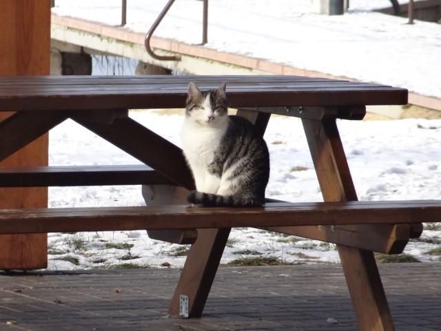 A ja tam czekam na słoneczko i na myszki...
