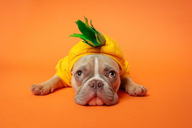 Zdjęcia psów. Te fotografie rozczulają!