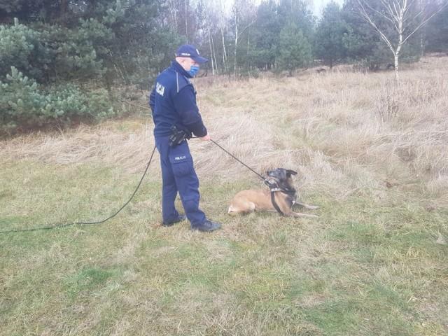 Przewodnik z psem Iskrą do poszukiwań dołączył rano i natychmiast okazały się one skuteczne