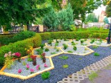 Powstało piękne miejsce w Nowej Soli. To pierwszy deszczowy ogród. Efekty prac można podziwiać przy parafii pw. św. Michała [ZOBACZ ZDJĘCIA]