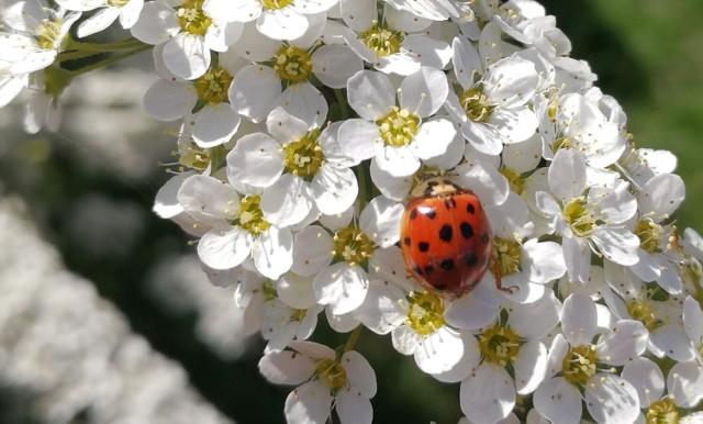 Zobaczcie cudowne, wiosenne zdjęcia Czytelników z Żagania i okolic. Nie można od nich oderwać oczu! Przesuwaj zdjęcia strzałakami
