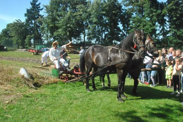 WILKOWICE. Dawno, dawno temu na wsi - tłumy na festynie prezentującym życie na wsi przed laty