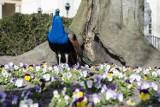 Tak wygląda wiosna w Warszawie [ZDJĘCIA]