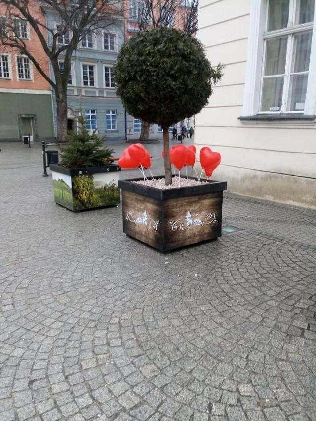 """14 lutego, Dzień Zakochanych. Na deptaku w Zielonej Górze trudno było rano zapomnieć, że świętujemy walentynki, bo w charakterystycznych donicach zakwitły czerwone, balonowe serca. To symbol walentynek - kojarzą się z miłością i zakochaniem. Właśnie tak wyglądał rano deptak. Jeżeli nie wstaliście wcześnie, to pewnie niewielu z was mogło to zobaczyć, bo serca znikały w tempie błyskawicznym...  14 lutego wszystkich mieszkańców Zielonej Góry powitały baloniki w kształcie serc dzięki Zakładowi Gospodarki Komunalnej sp. z o.o. w Zielonej Górze. Specjalnie nie było na nich nadruku z logo zakładu, żeby każdy mógł wziąć sobie balonik i komuś podarować!   POLECAMY TYCH PREZENT&Oacute  <center><div class=""""fb-like-box"""" data-href=""""https://www.facebook.com/gazlub/?fref=ts"""" data-width=""""600"""" data-show-faces=""""true"""" data-stream=""""false"""" data-header=""""true""""></div></center>"""