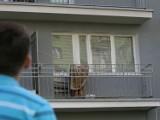 Huki, wrzaski, latające meble... Sąsiadka daje popalić mieszkańcom kieleckiego bloku