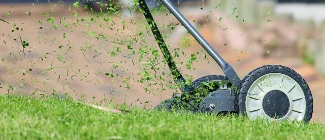W Żarach ekolodzy apelują o pozostawienie trawników bez koszenia.