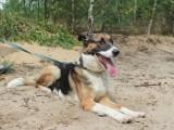 Zaadoptuj psiaka: Przepiękna i pełna życia sunia wciąż czeka