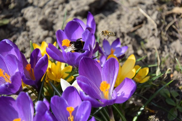 Słoneczna pogoda w Przemyślu i okolicach uaktywniła owady.