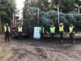 Choinka od ostrowieckich leśników ozdobi Jasną Górę na Święta Bożego Narodzenia [ZDJĘCIA, WIDEO]