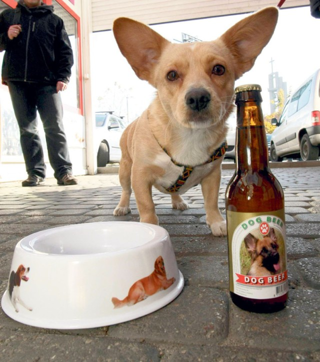 """Już niedługo wyjście do baru może odbywać się w szczytnym celu. Pijąc piwo w kilku warszawskich lokalach wspomożesz Stowarzyszenie Otwarte Klatki, powstałego by zapobiegać cierpieniu zwierząt.  W akcji """"Kup piwo dla zwierzaka"""" weźmie udział siedem stołecznych lokali. Oznacza to, że cały zysk uzyskany w danym okresie ze sprzedaży złocistego napoju, właściciele przekażą na cele statutowe Stowarzyszenia."""