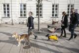 Mieszkańcy apelują o wybiegi dla psów. Są rozczarowani istniejącą infrastrukturą i polityką miasta