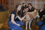 HAU! TO PET - Zwolnieni z teorii o pochopnej adopcji zwierząt! [ZDJĘCIA]