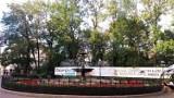 Z centrum Bielska-Białej znikną setki drzew! Kolej potwierdza wycinkę