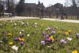 Rekord ciepła w Słupsku i nagła zmiana pogody
