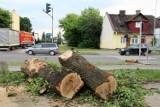 Zrobiło się łyso i smutno. Mieszkańcy Zamościa stanęli w obronie wycinanych drzew