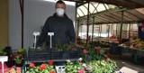 Chełm. Pelargonie, begonie, surfinie, petunie, a także duży wybór sadzonek warzyw na chełmskim bazarze. Zobacz zdjęcia