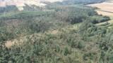 Ponad 300 hektarów lasu zniszczonych w kilkanaście minut. Nadleśnictwo Koniecpol wprowadza zakaz wstępu do lasu po nawałnicy