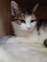 Schronisko dla zwierząt w Pile zachęca do adopcji kotów. Dlaczego warto?