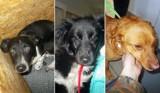 Psy do adopcji z lubelskiego schroniska. Zobacz te słodkie psiaki! Może znajdzie się dla któregoś z nich miejsce u Ciebie?