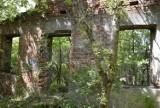 Dom na skarpie, czyli Willa Wanda w Skierniewicach w ruinie. Opanowały ją chaszcze ZDJĘCIA