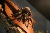Wrocław. Piękne i niebezpieczne. Zobaczcie pająki i skorpiony w Sky Tower (ZDJĘCIA)