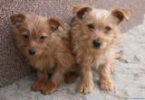 Psy szukają domu. Figa i Oliwka czekają na adopcję [ZDJĘCIA]