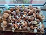 Wysyp grzybów w lasach Opolszczyzny. Nie brakuje imponujących okazów!