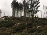 Pokrzywna. Wiatr przewrócił setki drzew. Duże straty w Cichej Dolinie pod Kopą