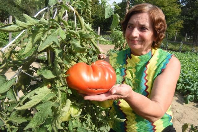 Wanda Matras z Otynia co roku ma niesamowite plony w swoim ogródku. Chętnie opowiada o tym, jak tego dokonać.