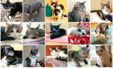 Radomszczańskie Towarzystwo Opieki nad Zwierzętami potrzebuje wsparcia